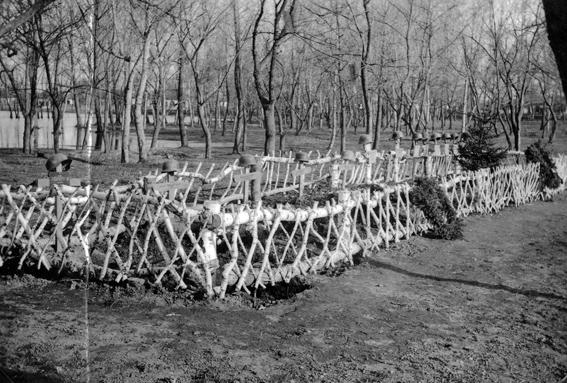 Німецькі поховання у парку ім. Шевченко.  Фото Kovács Nándor.  (www.nogradarchiv.hu)