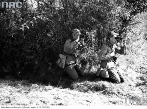 """Військо Польське під час """"великих волинських маневрів"""""""